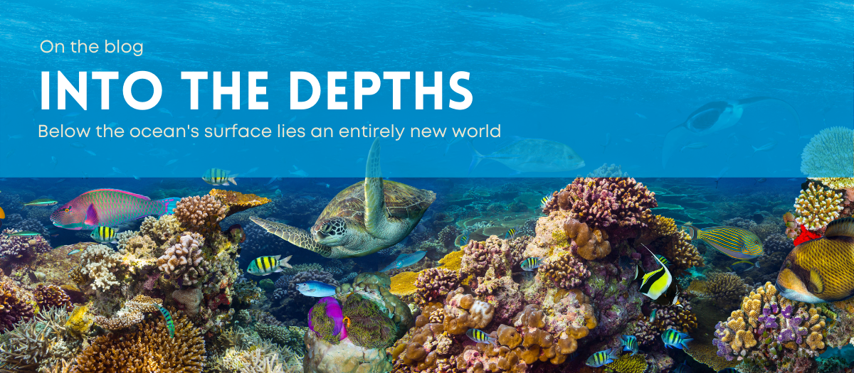 On the blog into the depths -- Below the ocean's surface lies an entirely new world